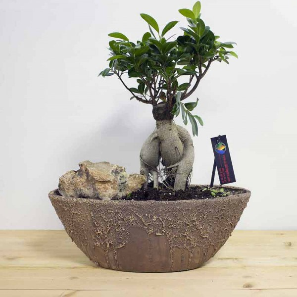 Bonsai Tumbled Amphora Brown  Flowerpot