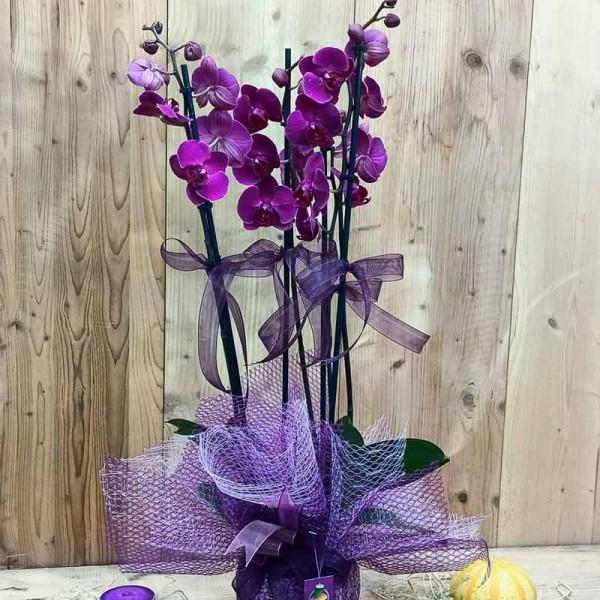4 Dal Pembe Orkide
