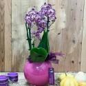 2 Dal Fuşya Orkide