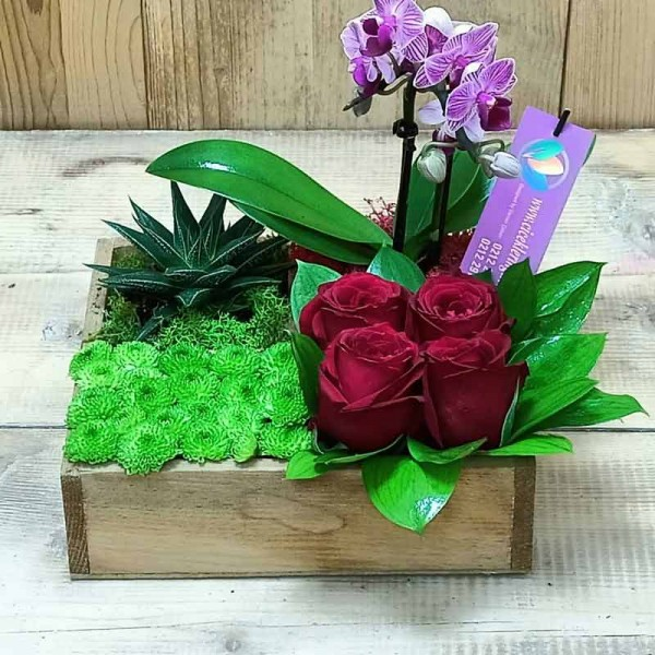 Mini Orchid and Succulent Plant Arrangement
