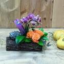 Mini Orchid and Succulent Plant Arrangement