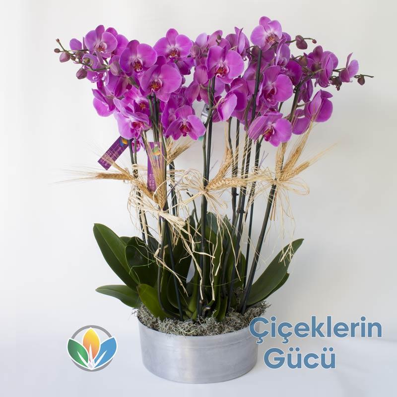 8 Branch White Orchid Metallvase