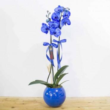 2 Dal Phalaenopsis Orkide