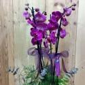 4 Branch Dalmatian Orchid