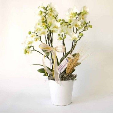 5 Branch White Orchid